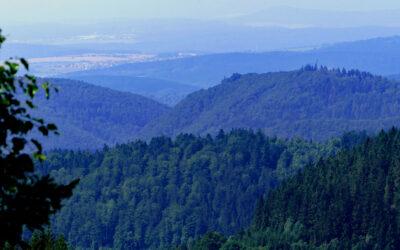 2021 Fotomarathon im botanischen Paradies von Oberhof